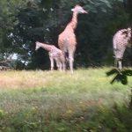 Bronx Zoo Animals! WW w/Linky! @BronxZoo #travel #NYC