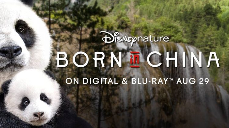 Dr. Anne Savage Sharing Disney's Conservation Efforts Worldwide  & @WaltDisneyWorld! #BornInChinaBluray @Disneynature