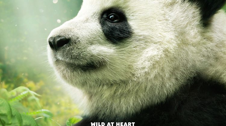 Happy International Panda Day! Plan to See Pandas, the Movie: Coming to IMAX® Theatres on April 6! #IMAXPandas @WBPictures @IMAX