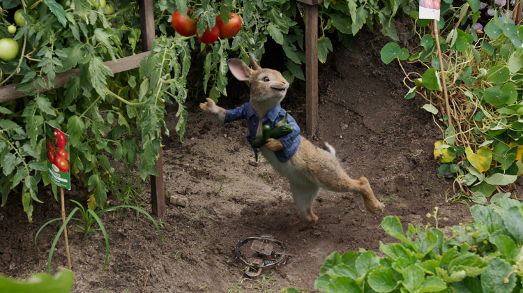 Peter Rabbit on HD Now & on 4K Ultra HD™, Blu-ray and DVD May 1! @SonyPictures #ad #peterrabbitmovie #peterrabbit